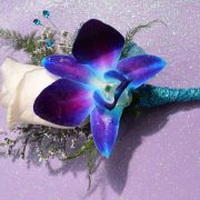Blue Orchid Bout