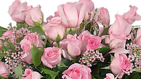 Sympathy Flower Preservation