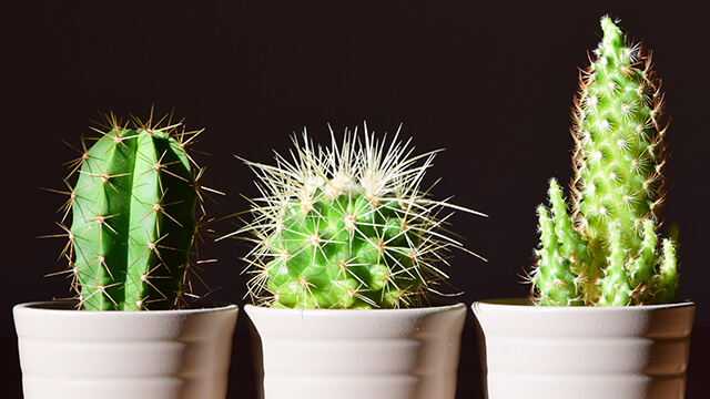 Group for potted cactus plants