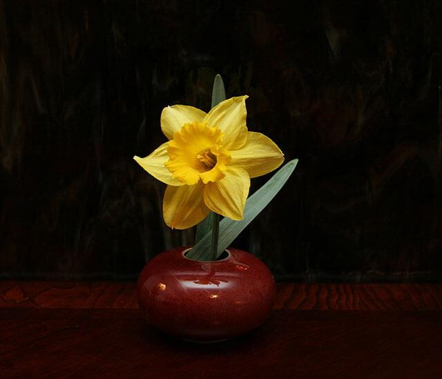 Daffodil in a small vessel