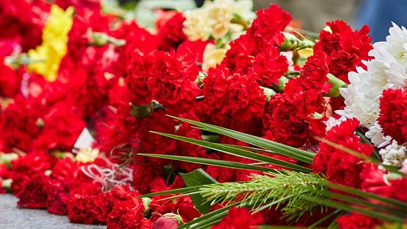 A group of red and white carnations