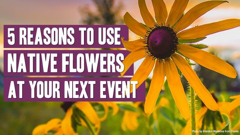 Five reasons to use native flowers at you next event